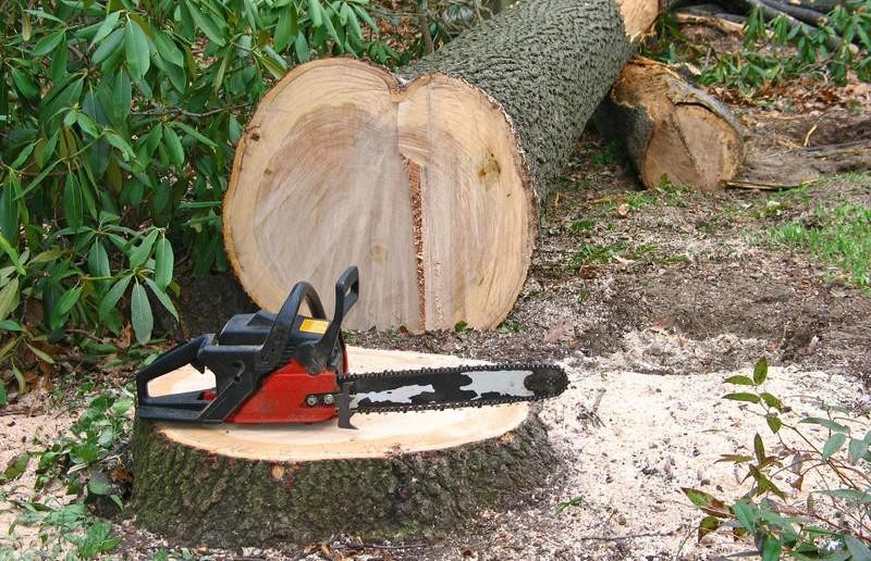 Дерево убило вальщика леса в Глубокском районе