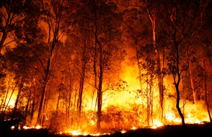 Лесные пожары выходят из-под контроля в Австралии