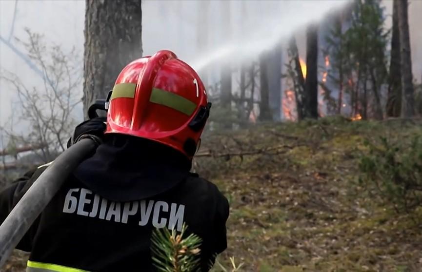 Более 20 пожаров за сутки: введены первые ограничения на посещение лесов в Беларуси