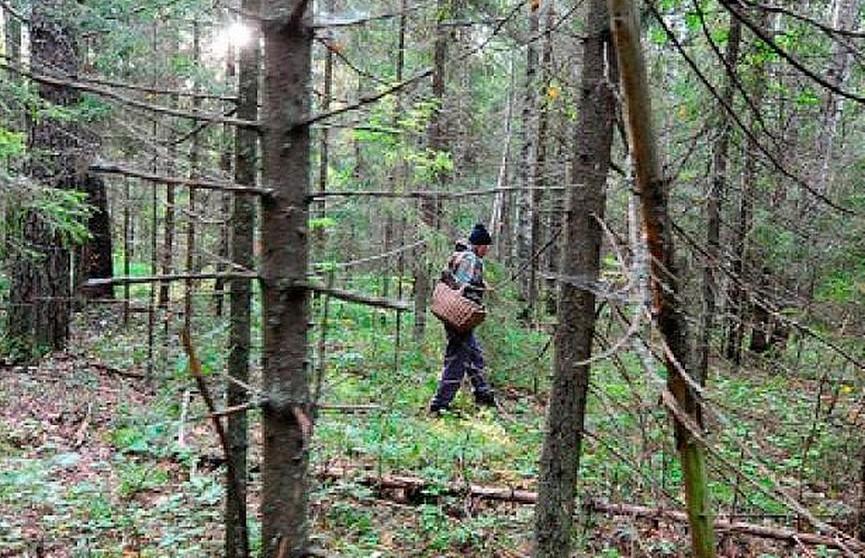 Человеческие останки нашли в лесу жители деревни Хотомель
