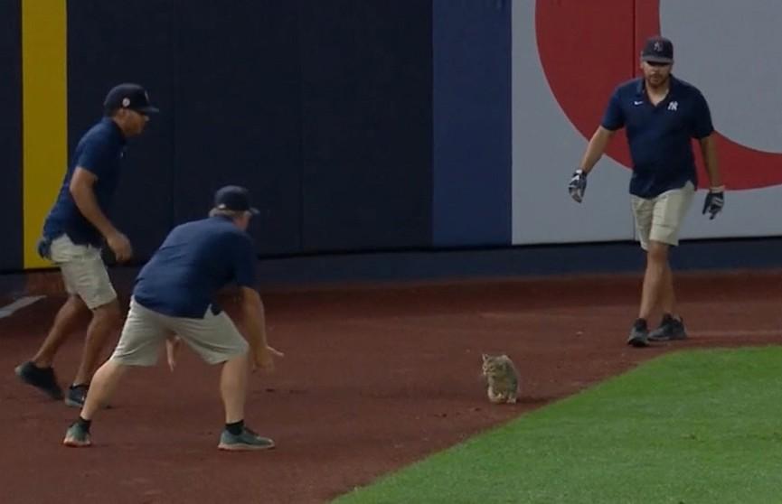 Кот выбежал на поле во время бейсбольного матча. Посмотрите, что он делает! Даже игроки начали наблюдать за ним! (ВИДЕО)