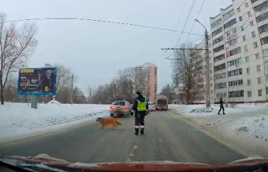 Видеофакт: в Челябинске сотрудник ДПС перекрыл дорогу ради хромого пса