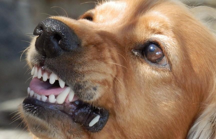 Что делать, если вы встретились с агрессивной собакой? Подробная инструкция
