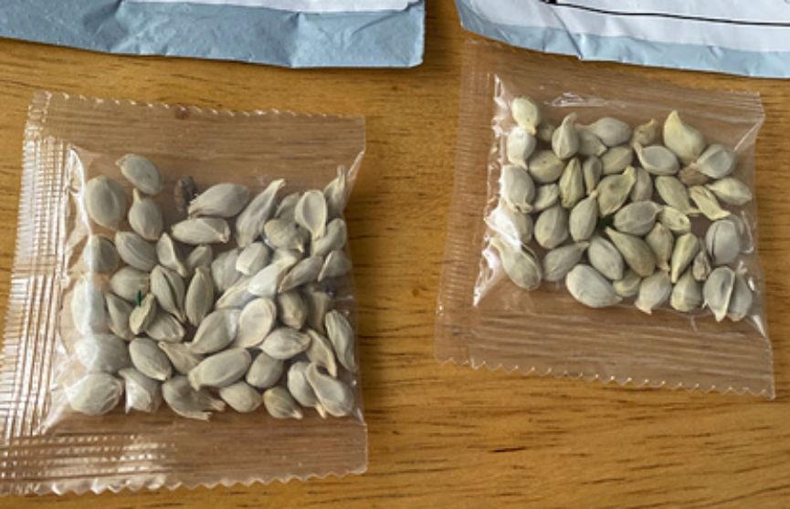 Как в «Шерлоке Холмсе»: жители США стали снова получать посылки с семенами. Этому нашли объяснение