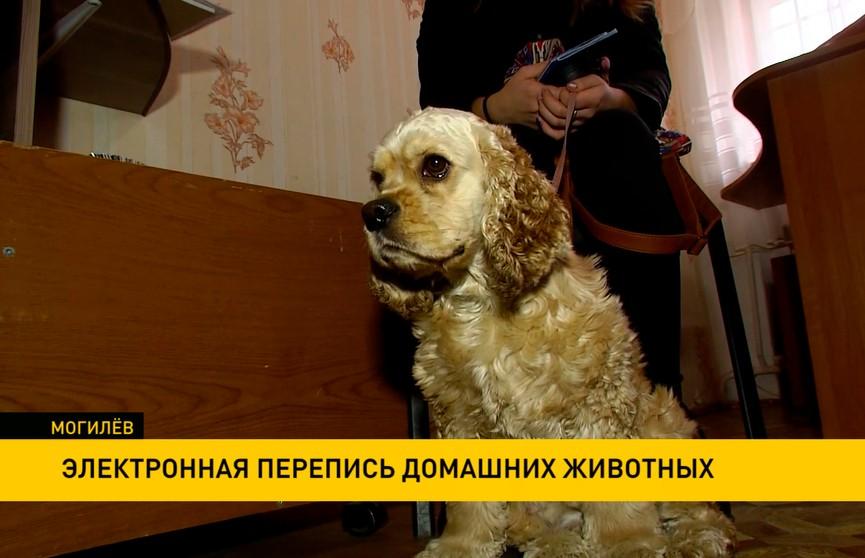 Электронную перепись домашних животных организовали в Могилеве: в базе данных более 3,5 тыс. питомцев