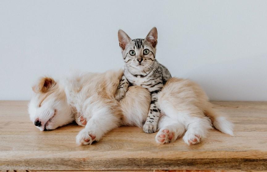 Антитела к коронавирусу обнаружили у кошек и собак