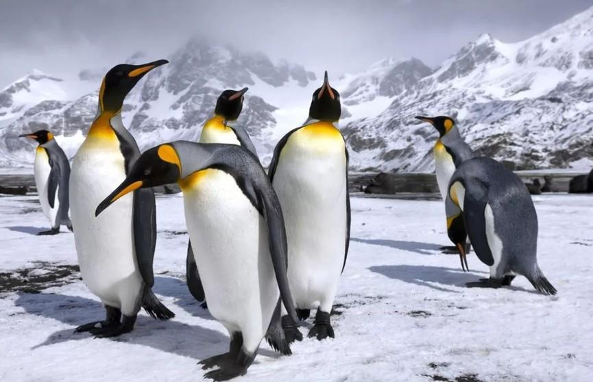В Антарктиде зафиксирован новый температурный рекорд
