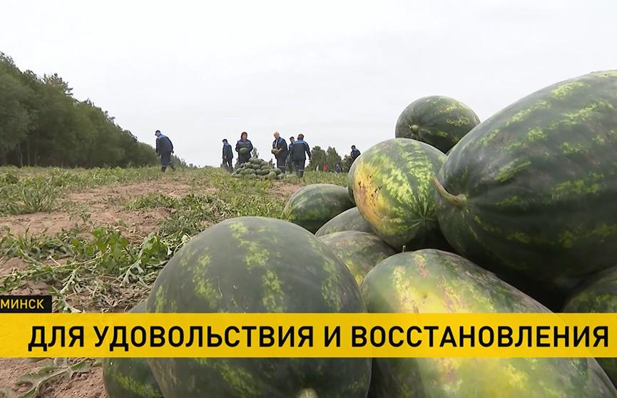 Арбузы, собранные Лукашенко на его подворье, передали пациентам детской инфекционной больницы Минска