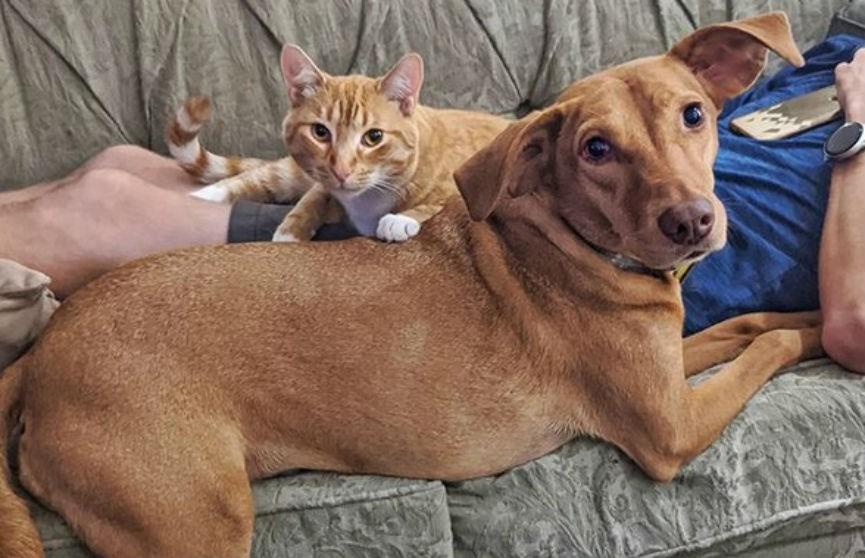Кот, который утешает пса, огорченного уходом хозяев, растрогал Сеть (ВИДЕО)