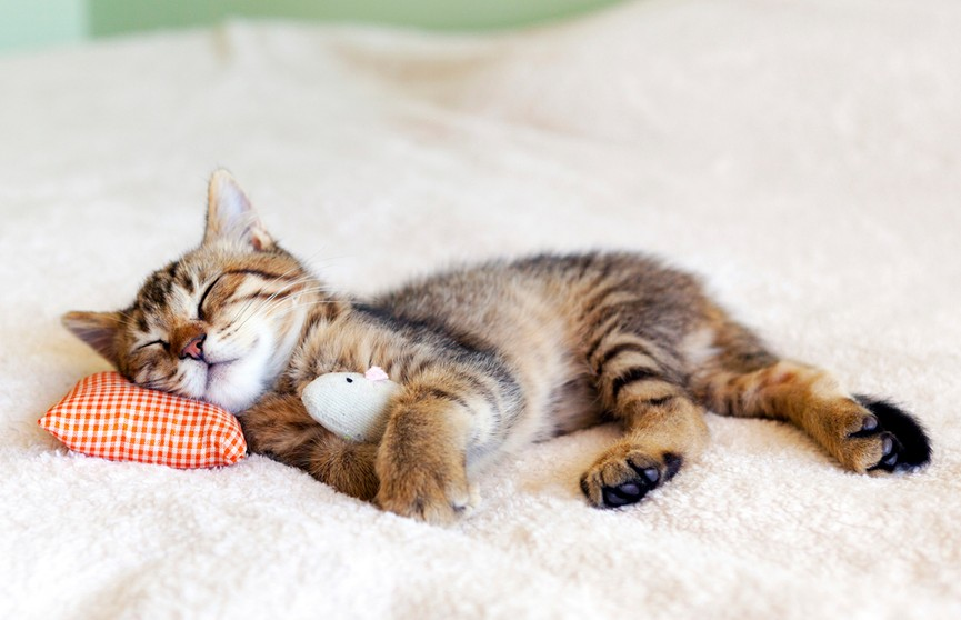 Парень обнаружил дома мышь и решил, что с ней разберется кот. Но такого поворота он не ожидал! Только посмотрите, что пушистик делает с грызуном! (ВИДЕО)