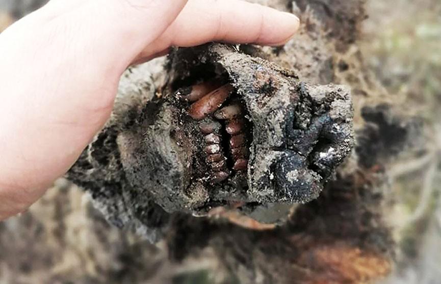 В Якутии нашли мумию доисторического медведя