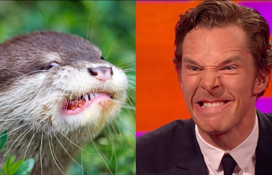 5 животных, которые ну очень похожи на людей. Сходство на третьем фото просто невероятное!