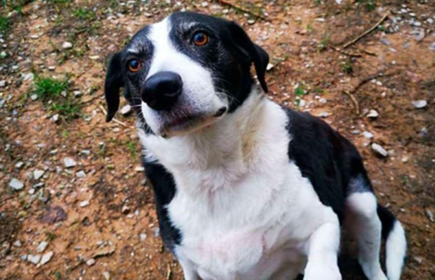 Собака обрела хозяев после 10 лет нахождения в приюте