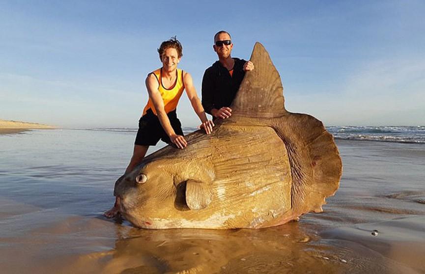 Рыбаки из Австралии нашли на берегу гигантскую рыбу (Фото)