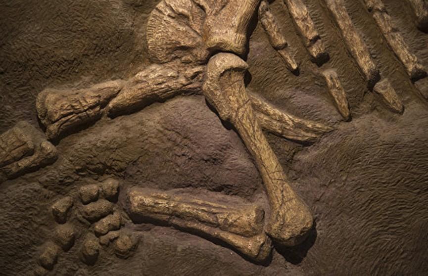 Останки неизвестного динозавра нашли в Аргентине