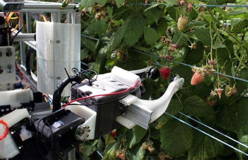 Робота для сбора ягод испытывают в Великобритании