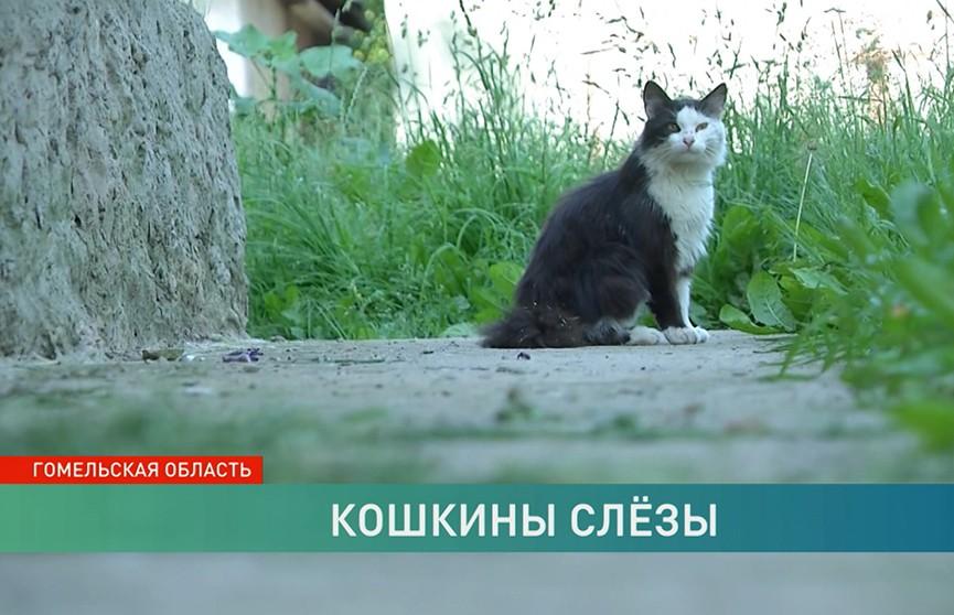 Кадры расправы над кошкой в Буда-Кошелеве попали в интернет. Что стоит за таким жестоким поведением?