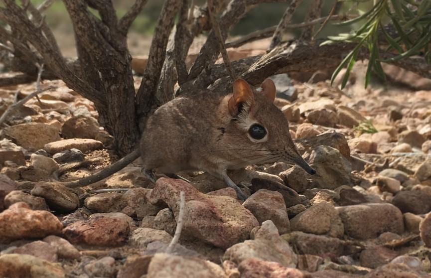 Ученые обнаружили животных, которые 50 лет считались исчезнувшим видом