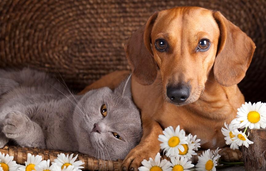 Собака приходит в гости к коту и зацеловывает его! Пушистый пожаловался хозяйке! Посмотрите – 100% будете смеяться! (ВИДЕО)