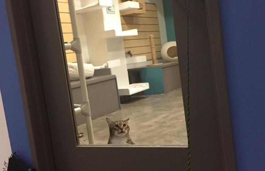 Кот-освободитель открывал всем клетки в кошачьем приюте, но его посадили в карцер