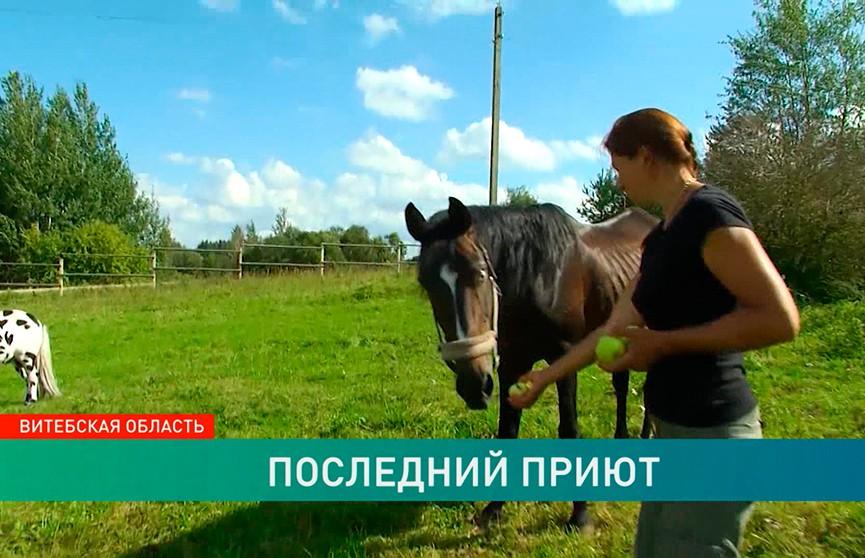 «Хочется, чтобы у них была жизнь»: как под Браславом спасают отправленных на бойню лошадей