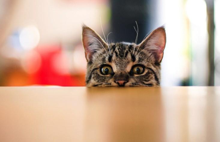 Кошка оказалась свидетельницей битвы двух крыс и решила понаблюдать за сражением