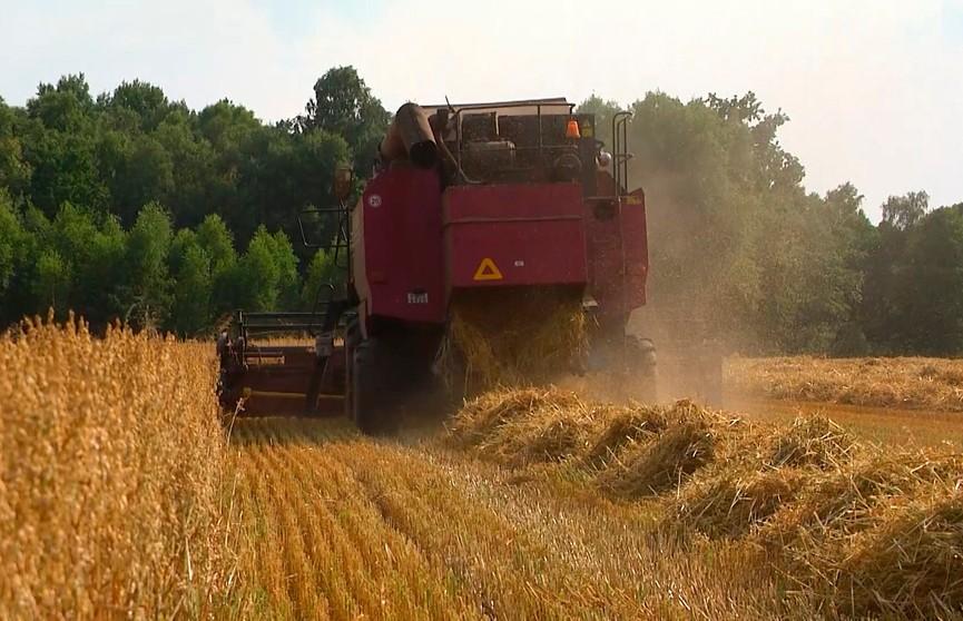 Уборочная-2021: как работается аграриям в разных точках страны и каковы прогнозы по урожайности в этом году?