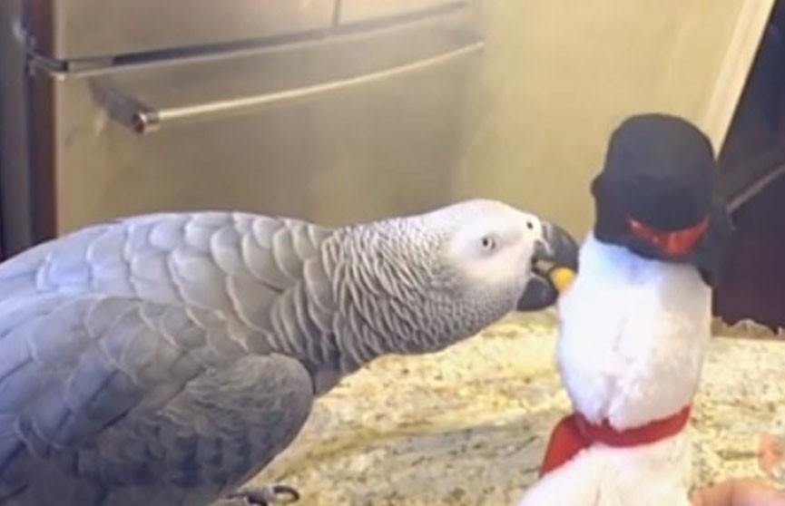 Как попугай подружился со снеговиком (ВИДЕО)