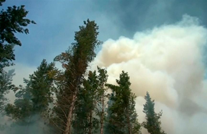 Несколько тысяч человек эвакуированы из-за лесных пожаров в Новой Зеландии