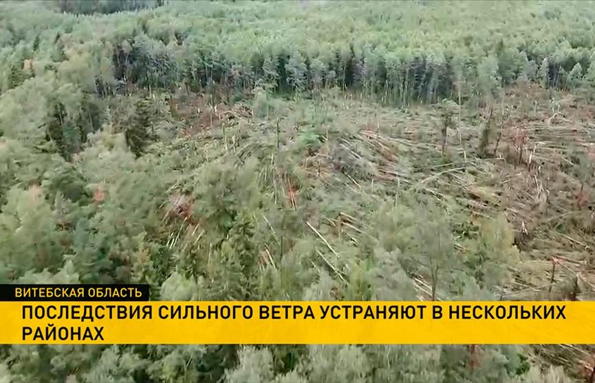 Повалены деревья, сорваны крыши: ураган обрушился на Россонский и Полоцкий районы