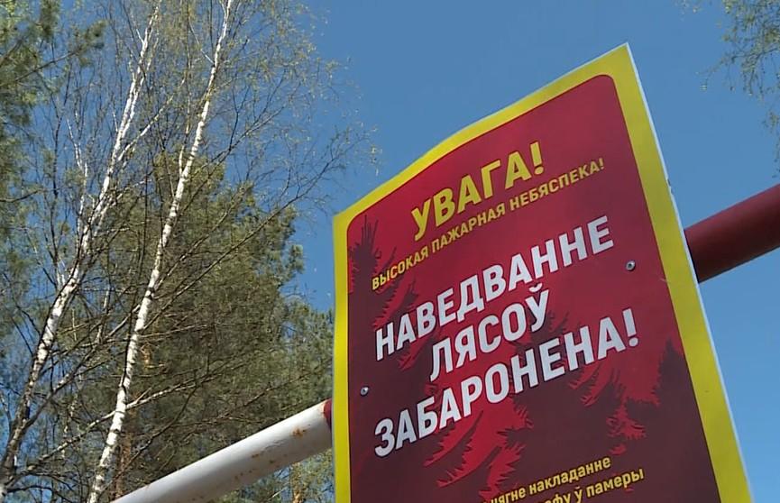 В 37 районах Беларуси действуют запреты и ограничения на посещение лесов