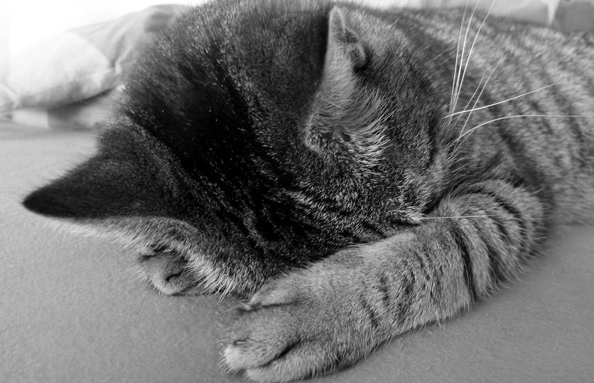 Кот, который никого не хочет видеть, рассмешил соцсети
