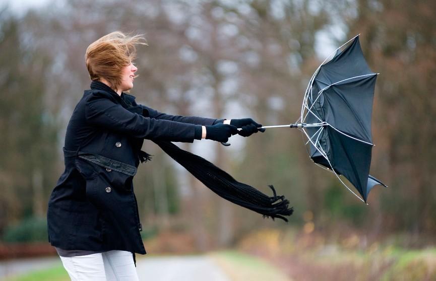 Осторожно: сильный ветер! Оранжевый уровень опасности объявлен в Беларуси 21 ноября