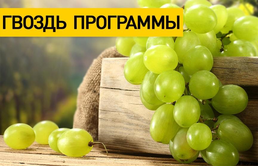 Небывалый урожай винограда собрали в Гомельской области