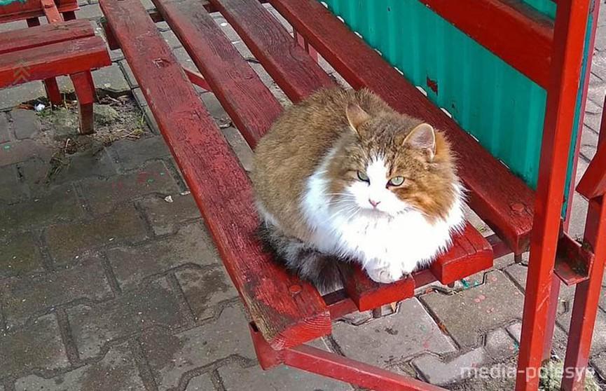 В Пинске кошка ждет свою умершую хозяйку на остановке
