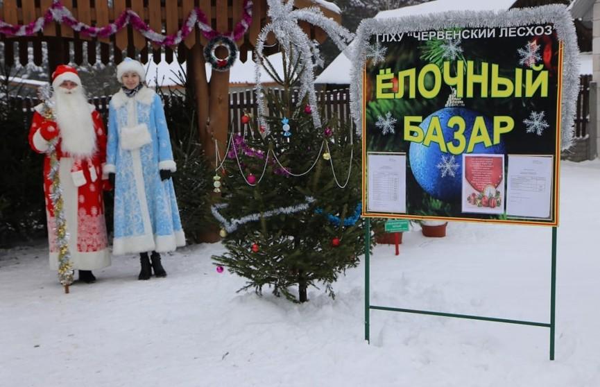 Елочные базары начнут работу 19 декабря