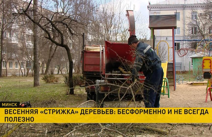 Пилить или не пилить. Почему срубают и обрезают деревья в городе?