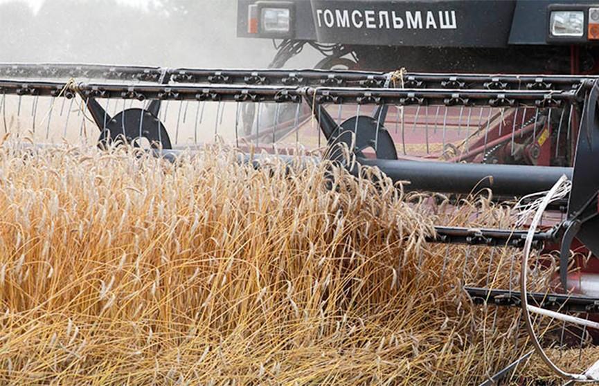 Высокий урожай зерновых и зернобобовых: белорусские аграрии подводят итоги года