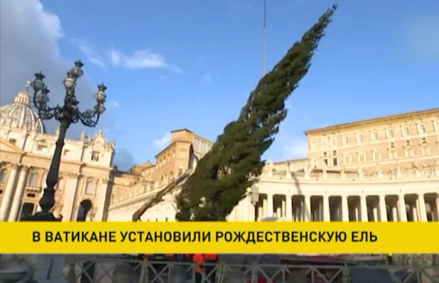 Ёлку высотой 23 метра установили на площади Святого Петра в Ватикане