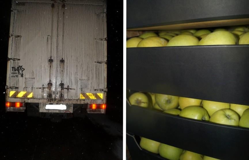 Девять грузовиков с яблоками задержали в Могилёвской области