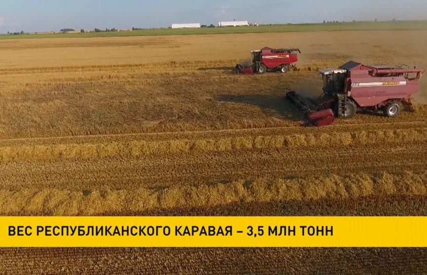 Белорусские аграрии намолотили 3,5 миллиона тонн зерна