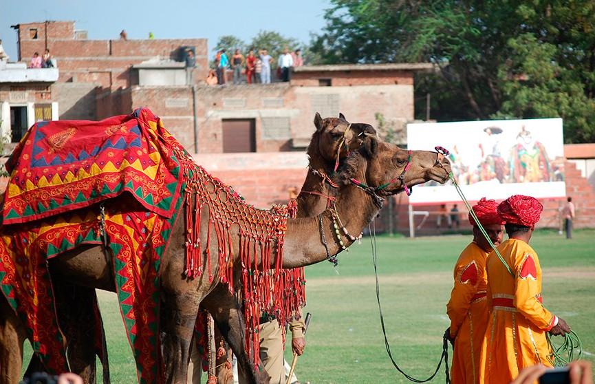 В Индии открылся ежегодный верблюжий базар