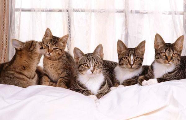 Животных много не бывает: женщина приютила 250 кошек