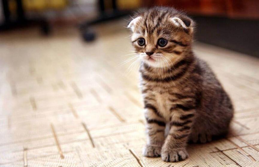Котенка напугала вылезающая из-под шкафа загадочная лапа (ВИДЕО)