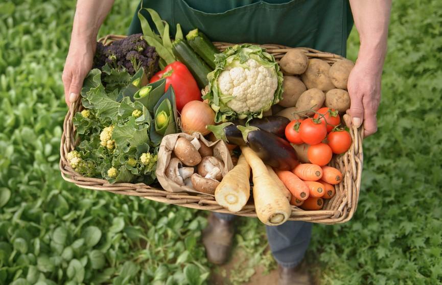 Лукашенко о производстве органической продукции: Жесточайшая диктатура технологий и производства, поблажек не будет!
