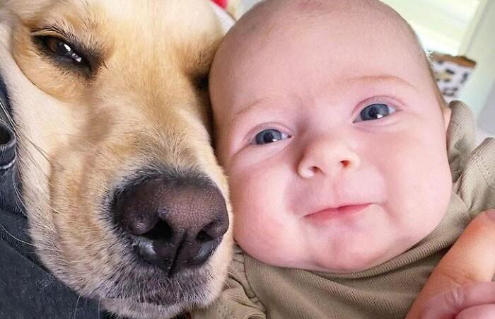 Невероятно трогательные фото, которые показывают дружбу ретривера и ребенка. Только посмотрите!