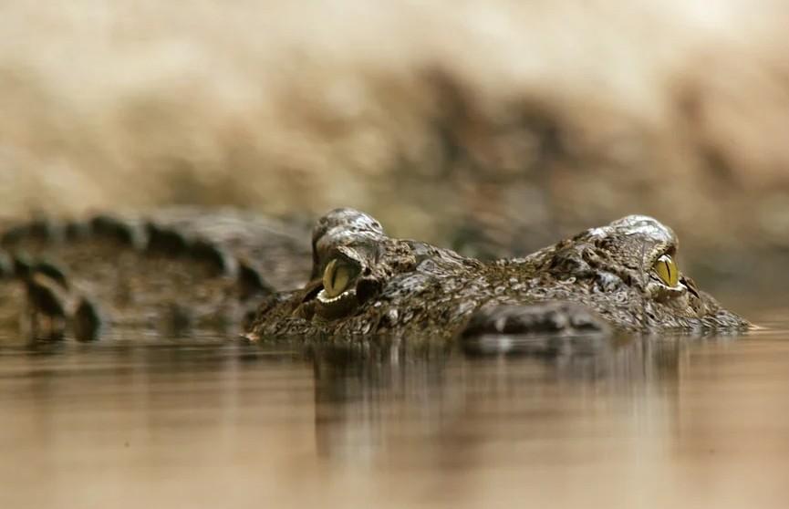 Браконьер выловил в российской реке крокодила