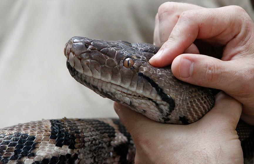 Журналистка рассказала о том, что змеи боятся людей больше, чем люди их. Но по видео это не скажешь