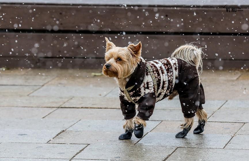 Гололедица и усиление ветра – погода в Беларуси на 23 ноября