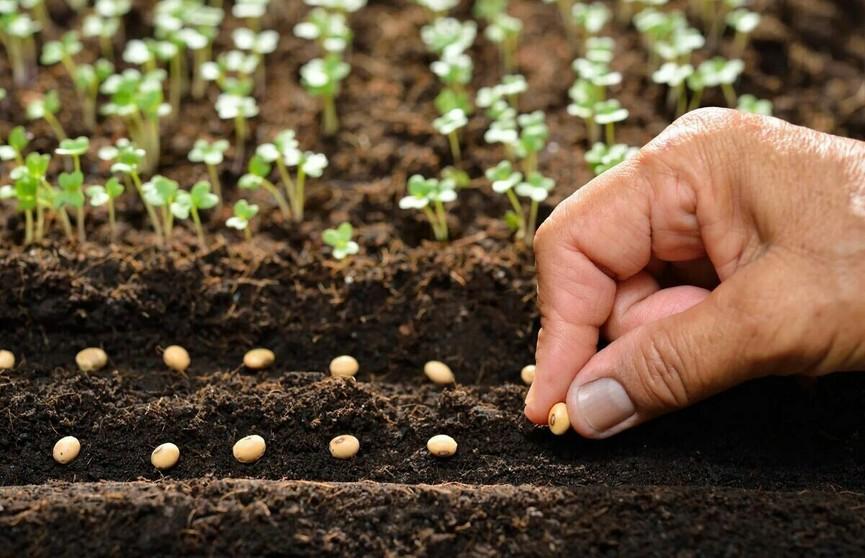 11 самых полезных примет для огородников. Что из этого реально работает?
